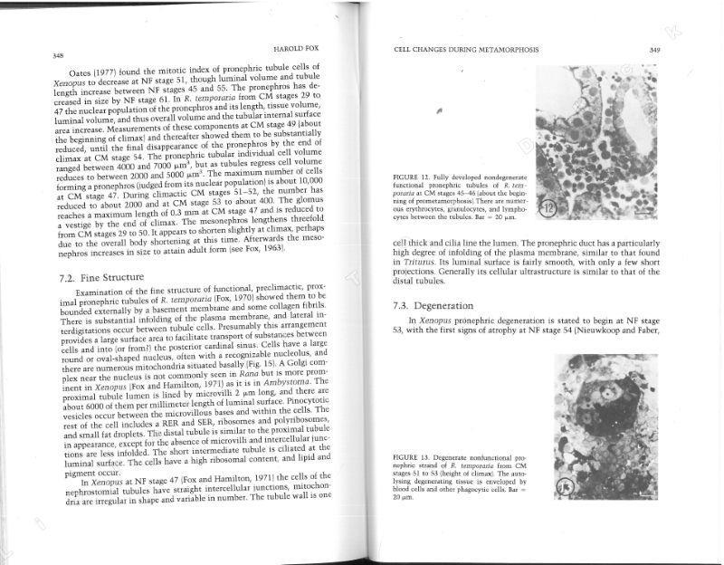 developmental biology gilbert 11th edition ebook